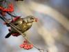 Piano d'azione nazionale per il contrasto degli illeciti contro gli uccelli selvatici