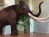 caccia village mammut