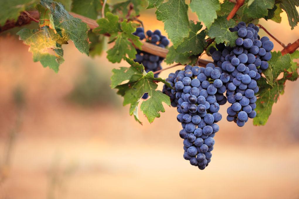 Le migliori idee per creare un costume da 'grappolo d'uva ...
