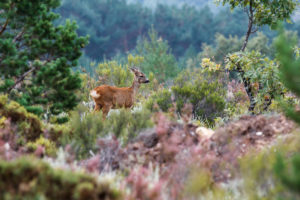 montefeltro caccia all'estero
