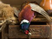 Lepre e fagiano cacciati
